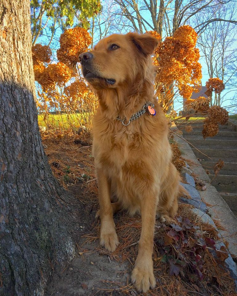 Dog feeding guidelines for successful transition to a raw food diet