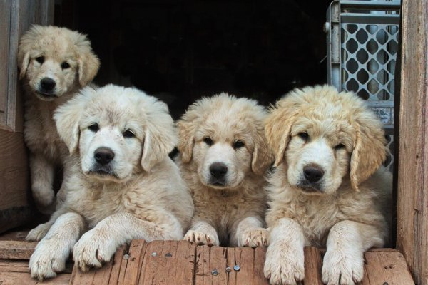 10 most frequently asked dog questions at Dog Nutrition Naturally