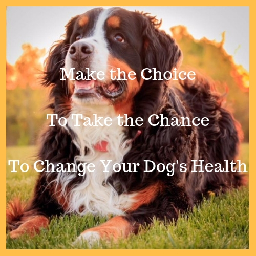 Dog Nutrition Naturally is the best way to help your dog to better health for life.