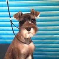 Dog Nutrition Naturally Available at Jazzmin's Dog Grooming Napanee Ontario