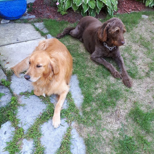 Dog-Nutrition-Naturally.com. Teddy and Lily love their raw food diet for dogs.