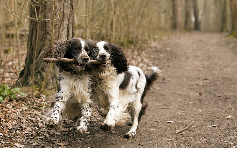 All natural dog food is at the core of good health for dogs.