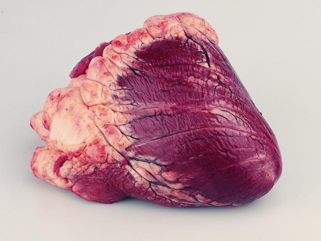 How To Make Beef Heart Dog Treats