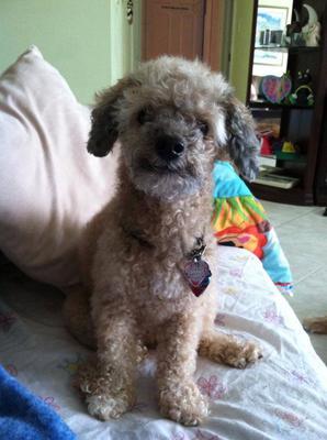 My sweet boy. Died 2/6/14