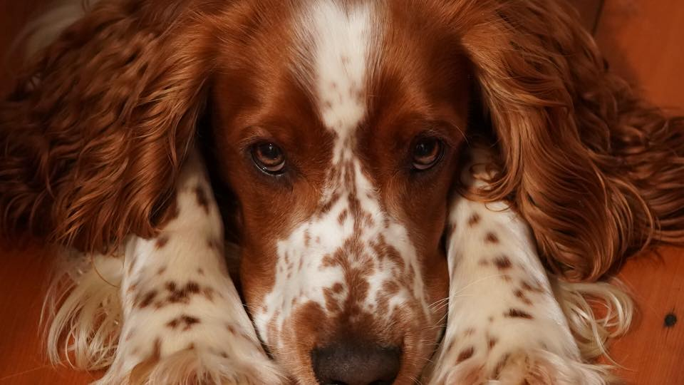 dog nutrition naturally, holistic health care for dogs
