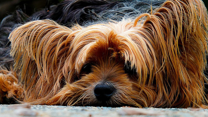 dog health problems, common dog health problems, dog health issue, dog health, canine health concern
