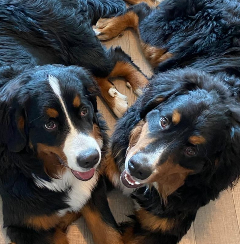 Dog Nutrition Naturally