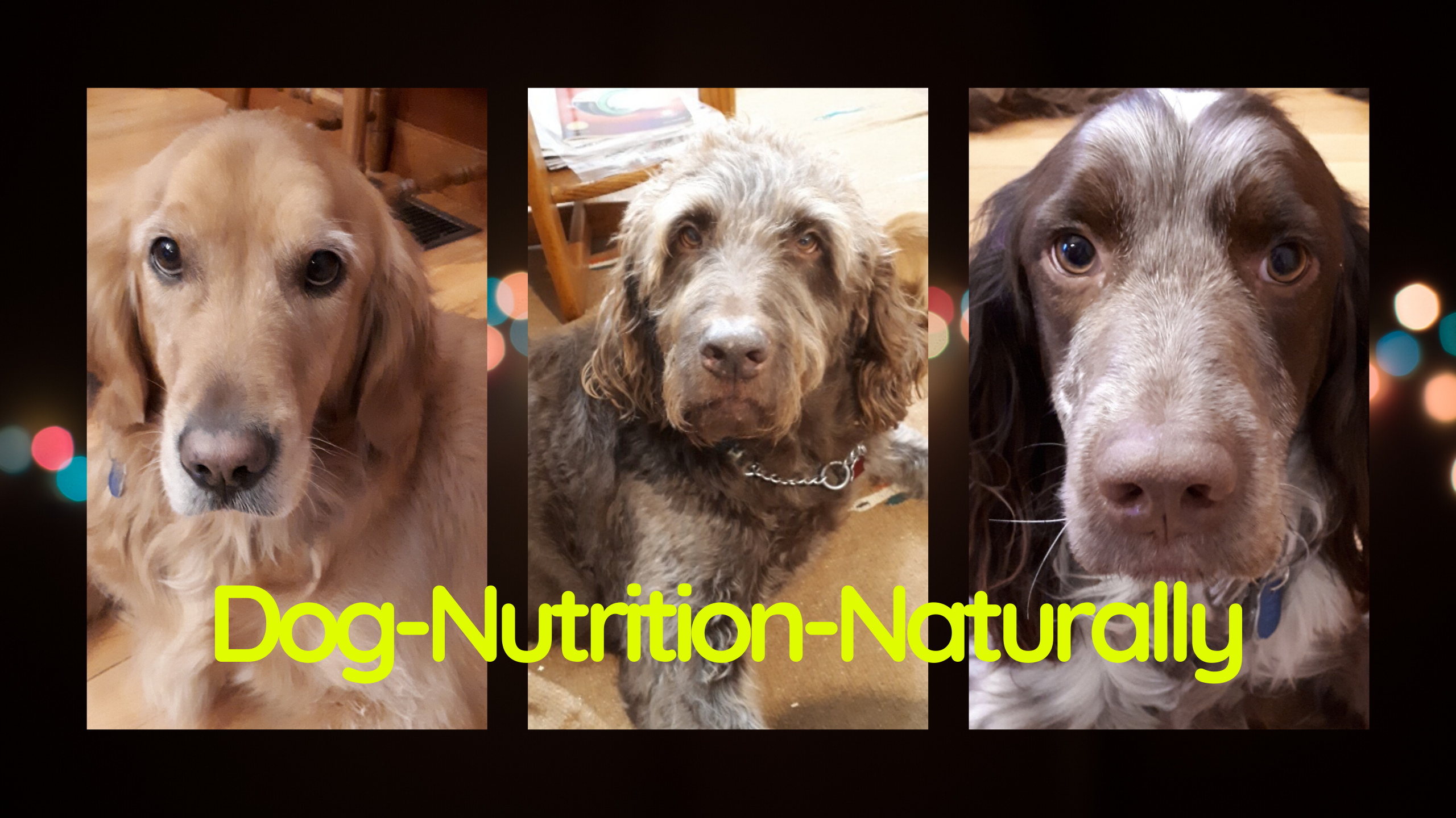 Learn About Dog Nutrition Naturally