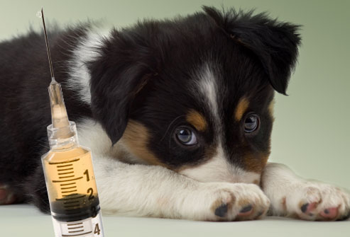 dog vaccinations, puppy shots, dog vaccines