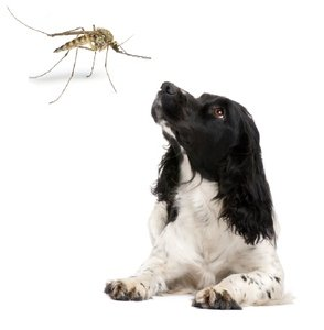 How To Get Rid Of Heartworms In Dogs Naturally